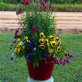 Snapdragons and pansies in pot- good for early spring color