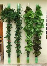 vegetable garden ideas gifts and diy pinterest
