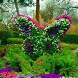 butterfly flower garden ideas pinterest