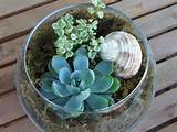 35 Indoor And Outdoor Succulent Garden Ideas » Photo 25