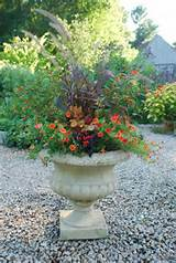 planting containers for late summer into autumn