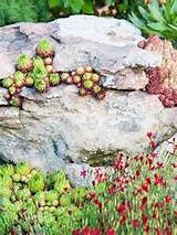 rock garden ideas must have succulents
