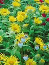 Perennial Garden Ideas : HGTV Gardens