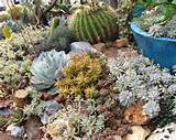 Cactus & Succulent Gardens | Rhinamic Workforce