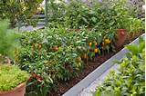 how to garden vegetables vegetable garden peppers jww 2766 jpg