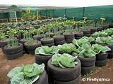 ... Cows, Veggies Gardens, Tyre Gardens, Vegetables Gardens Ideas Tyre