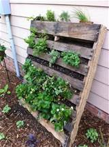 refresh your eyes and mind with pallet vegetable garden 101 pallets