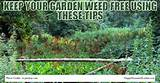 Keep Your Garden Weed Free Using These Tips | Happy House and Garden