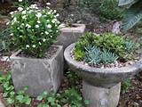 container gardens carbondale co photo gallery landscaping