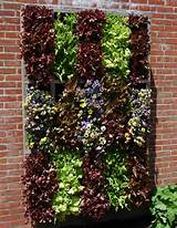 growing up tips and tricks for vertical gardening hometipster