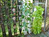 Farming or Gardening in Bottle Towers or Pot Towers (Willem Van ...