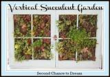 Vertical Succulent Gardening Tutorial - Second Chance To Dream