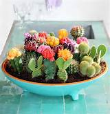 mini cactus garden ideas