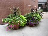 Container Plants in Baltimore | Danielles Garden Blog