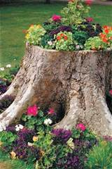 Tree stump planter. These container gardening ideas offer a great way ...