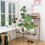 tips to make simple and beautiful garden indoors golden age gardens