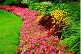 Jardim com flores silvestres - Fotos e fotos|Seu portal de imagens ...