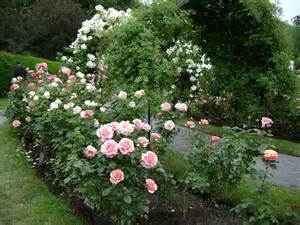 Rose Garden Free Stock Photo HD - Public Domain Pictures