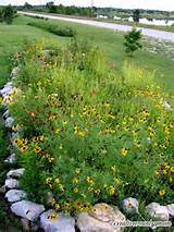 Beautiful Flower Garden. Great Ideas. | Garden | Pinterest