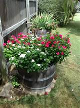 Half whiskey barrels for weed free flower gardening.