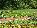 small-backyard-vegetable-garden-ideas-small-backyard-vegetable-garden ...