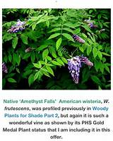 native part shade garden ideas pinterest