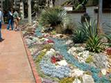 with succulent rock garden ideas discussion also succulent rock garden