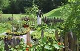 vegetable garden1 jpg