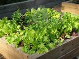 home vegetable garden ideas wooden raised beds vegetable garden design