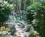 ... Ideas with forest garden path ground covers hidden path pavers privacy