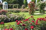 rose garden gardening tips garden guides rose garden