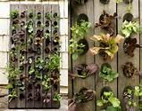 Jardim Vertical de ervas | Arte e Sabor