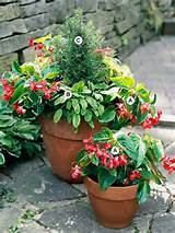 ... container/plans-ideas/container-garden-plant-combinations-for-shade/#