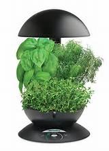 aerogarden 3 pod indoor garden with gourmet herb seed kit jpg