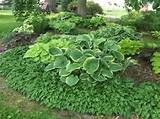 shade garden designs 9 gardening outdoors pinterest