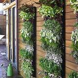 Decorative vertical gardens and Green wall design ideas