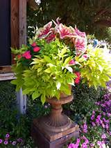 Beautiful Container Garden Ideas - Decorchick! ®