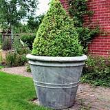 large garden pots garden design ideas