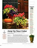 Container gardening - Southern Living | container gardens | Pinterest