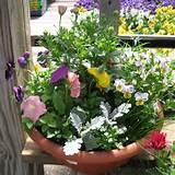 container gardening idea dusty miller pansies gaillardia petunias