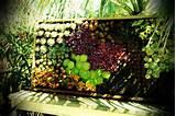 vertical! | Great Garden Ideas | Pinterest