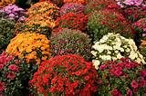 Picture for Planting flowers For Fall And Winter