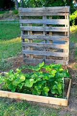 strawberry patch pallet trellis wooden pallets pinterest