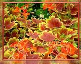 fall garden plants gardeners