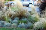 landscaping with ornamental grasses ideas http pinterest com pin