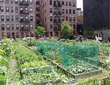 Tips for gardening in the city, urban gardening ideas