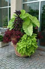 ... : Success with Container Gardens for Newbies & Folks Without Gardens