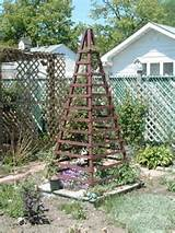 RE Where can I get really inexpensive trellis 39 for 3 clematis