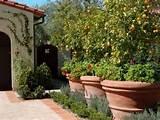 outdoor privacy ideas - Google Search | garden | Pinterest