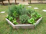Custom Food Gardens